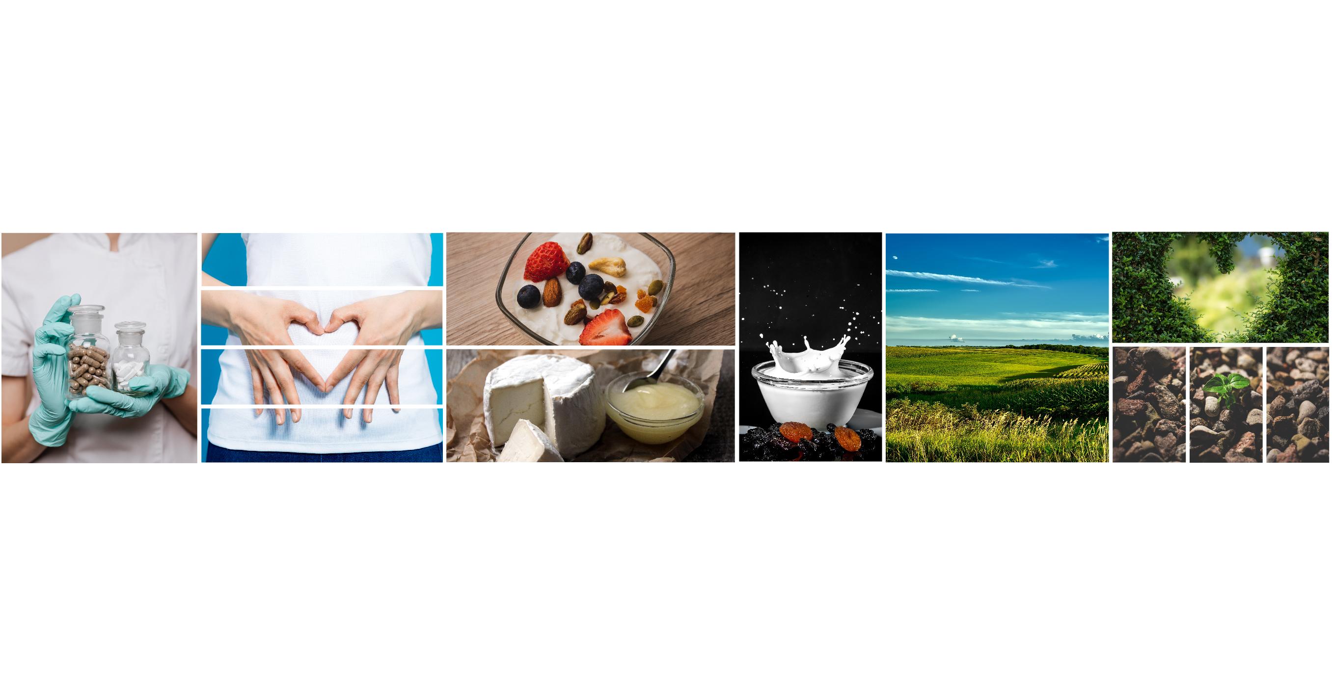 Proxis-Developpement-groupe-industriel-francais-contact-bioprox